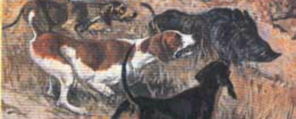 Θανατηφόρα επίθεση λύκων σε κυνηγόσκυλα στο Βέρμιο!