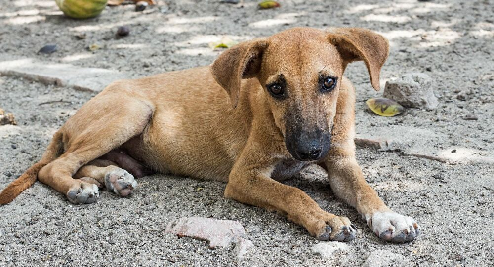 Πρόγραμμα υιοθεσίας αδέσποτων σκύλων μέσω διαδικτύου!
