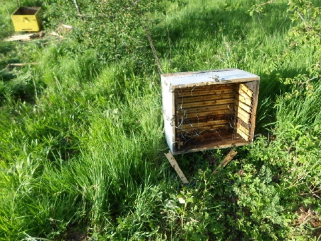 O Μελισσοκομικός Σύλλογος Βέροιας!